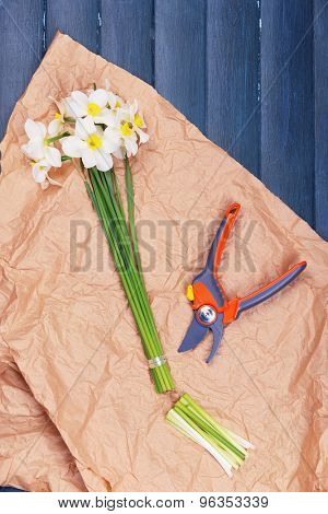 Beautiful daffodils with pruner on paper on wooden table