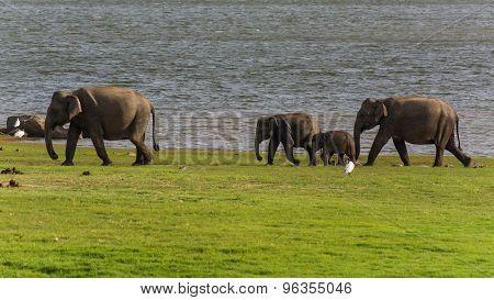 Elephant Watching On A Safari Game Drive