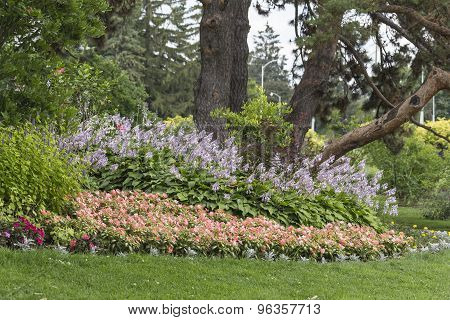 A forested garden
