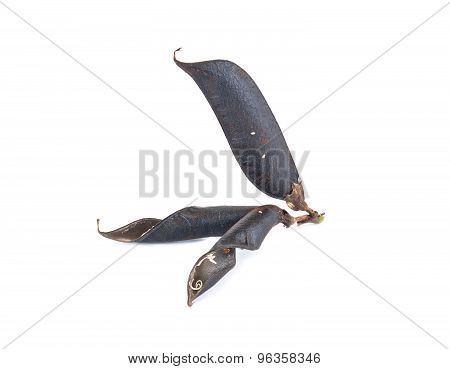 Seed Of Plant Of Vicia