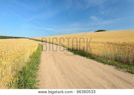 The Path Through The Wheat Field