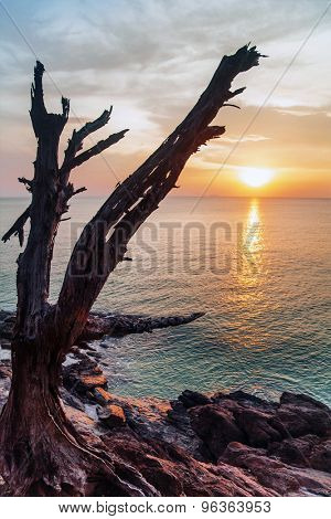 Dead tree trunk on rocks against sunset