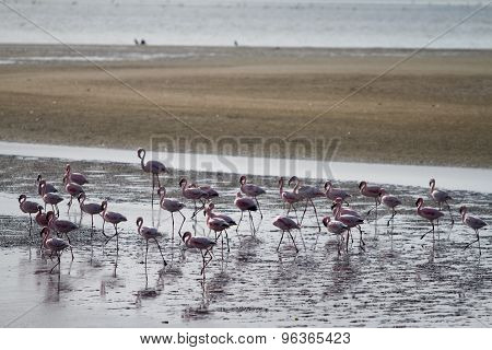 Red Flamingos