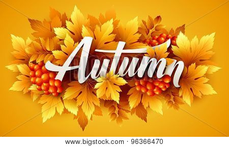 Autumn typographic. Fall leaf. Vector illustration