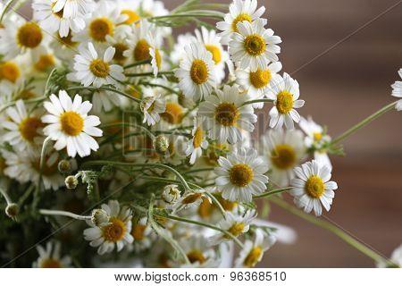 Beautiful daisies close up