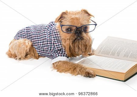 Serious Dog In Glasses Reading A Book