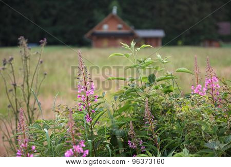 Meadow, In Background Wood Log Cabin
