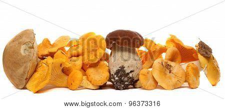 Wild Foraged Mushroom selection isolated on white background, with shadow. Boletus Edulis mushrooms