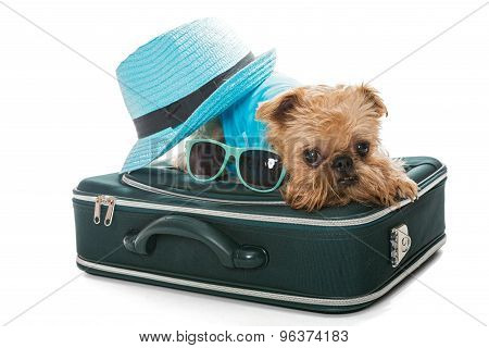 Dog Breed Brussels Griffon And Suitcase