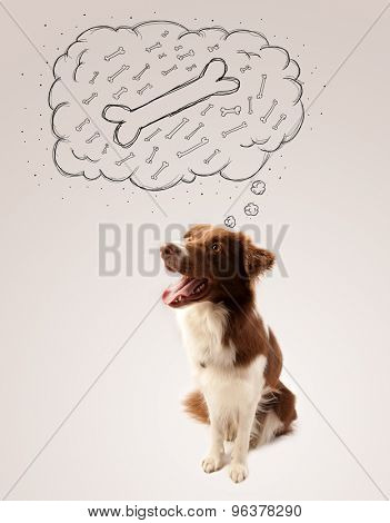 Cute brown and white border collie sitting and dreaming about a bone in a thought bubble