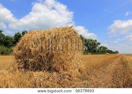 Nice summer meadow with hayrolls