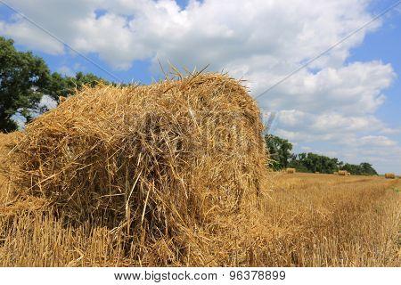 summer crop field with hay rolls