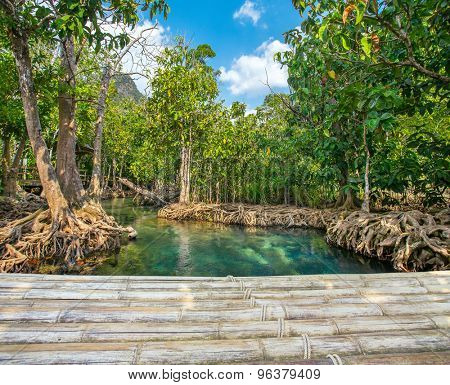 Mangrove trees along the turquoise green water with a bamboo bridge in the front