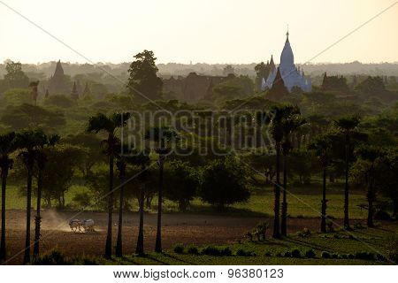 Sunrise View Of Landscape And Agriculture Fields With Temples, Bagan, Myanmar