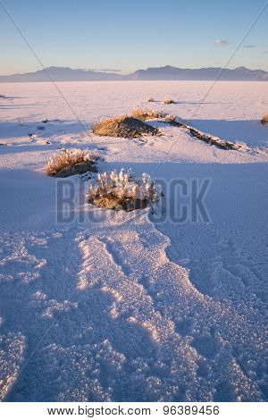 Vertical Sage Brush Frozen Ground Salt Flats Utah Desert