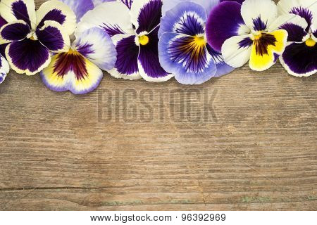 Pansy Border Of Viola Tricolor Flowers On A Wooden Background