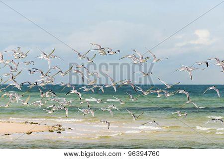 Sea Birds Over The Ocea
