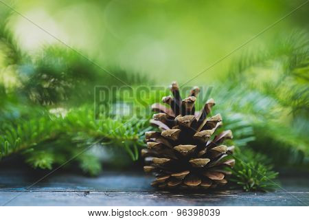 Pine cone on wooden table
