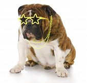 pic of laughable  - english bulldog wearing star sunglasses and necklace with reflection on white background - JPG