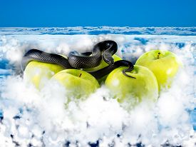 stock photo of evil  - Black snake and apples in the clouds - JPG