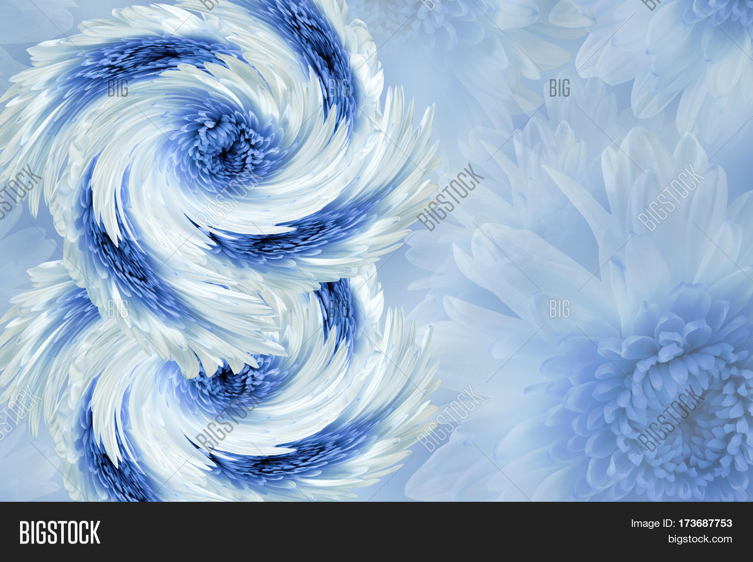 Flowers on blurry white blue background blue white flowers flowers on blurry white blue background blue white flowers chrysanthemum floral collage dhlflorist Gallery