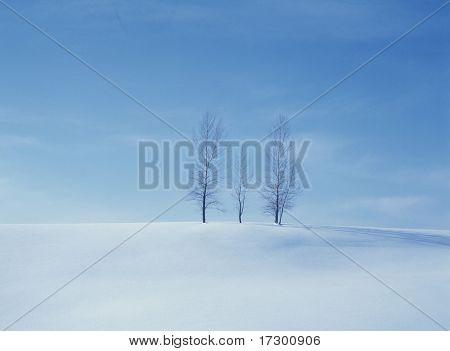 winter details