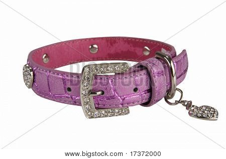 dog collar isolated