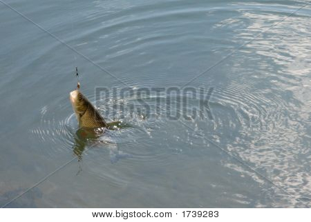 Fish On Lure
