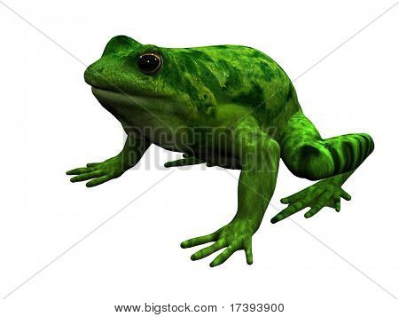 Toad in the isolation of a white background