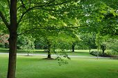 stock photo of maple tree  - fresh green maple tree and lawn in spring time - JPG