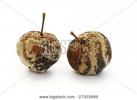 Rotten disgusting apple on a white background