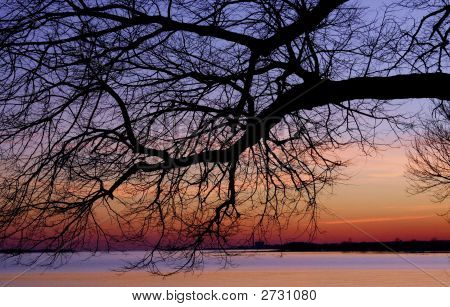Branch Over Ocean Sunset