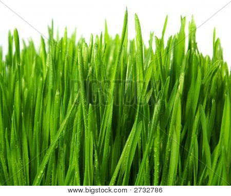 Wheatgrass aislado