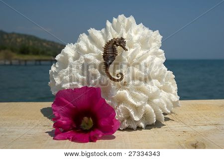 Coral, sea horse, and a tropical flower near the ocean