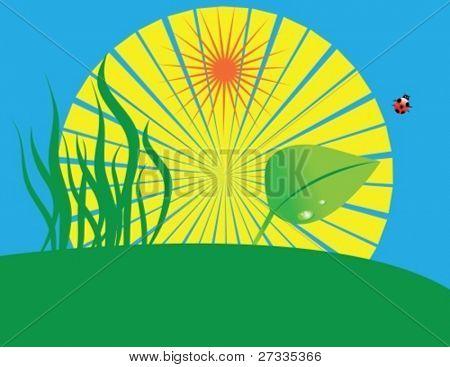 Gras, Blatt, Marienkäfer und sun(vector)
