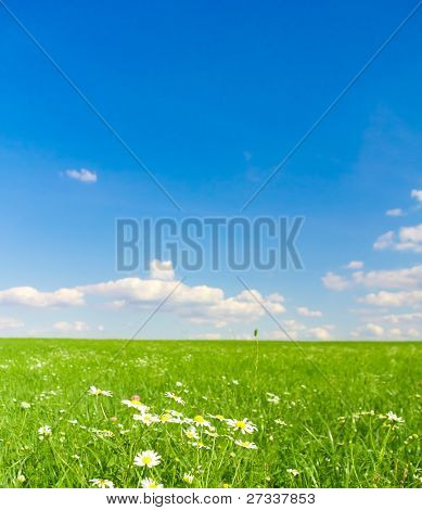 Farm Flowers bloom Grass