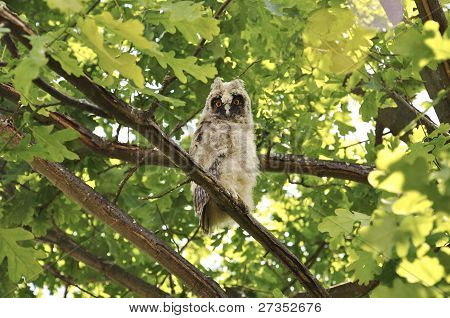 Forest bird of prey owl sitting on branch