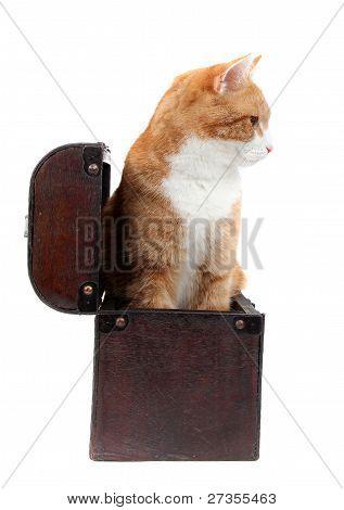 Snoopy Tomcat In Treasure Chest