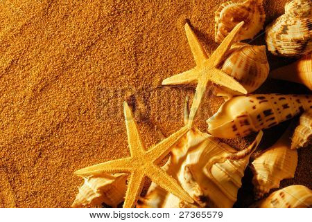 Seashell on sand with golden twilight.