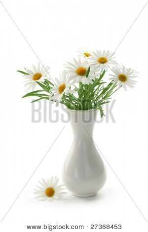 Daisies in vase on white background