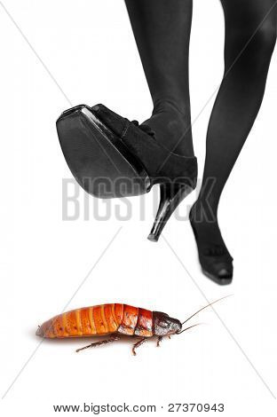 A high heel about to step on a cockroach isolated on white background