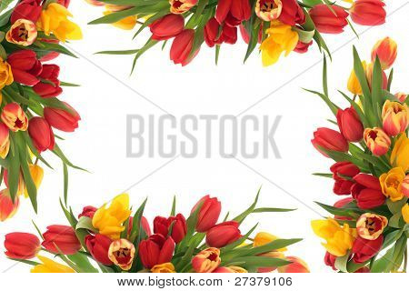 Tulip flower spring border isolated over white background.