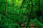 Background - Bridge In Subtropical Forest, Yew-boxwood Grove With Mossy Tree Trunks poster