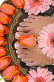 stock photo of toe nail  - Spa treatment with beautiful elegant tulips and gerberas - JPG