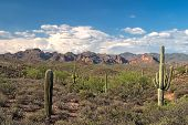 foto of superstition mountains  - Saguaros and Superstition Mountains in Sonoran Desert - JPG