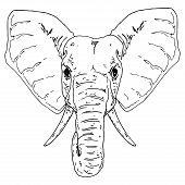 Elephant Icon. Vector Illustration Of The Face Of An Elephant. Hand Drawn Little Elephant. poster