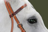 White Horse With Green Eye