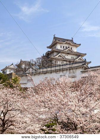 Himeji Castle In Cherry Blossom Season