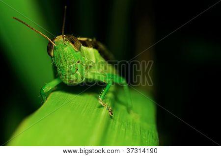 Grasshopper macro