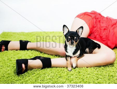 Pretty Little Funny Puppy Sitting Over Beautiful Long Woman Feet